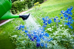 Expert Local Gardeners in Uxbridge, UB8